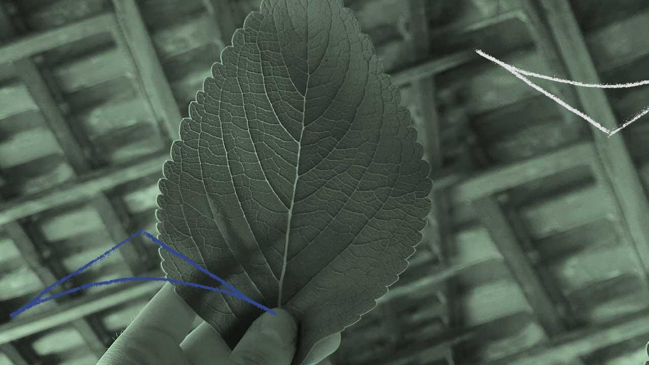 <b>Grazi Flores apresenta: Lacuna Tropical #60</b>
