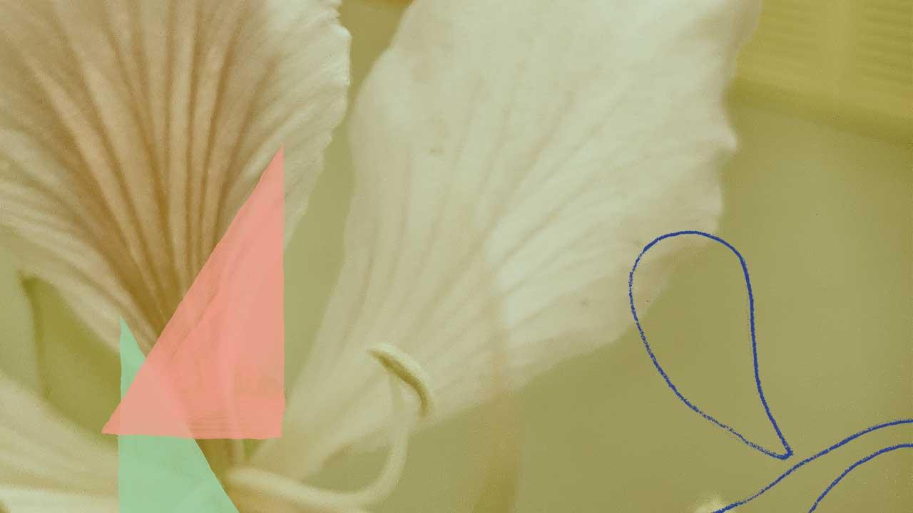 <b>Grazi Flores apresenta: Lacuna Tropical #73</b>