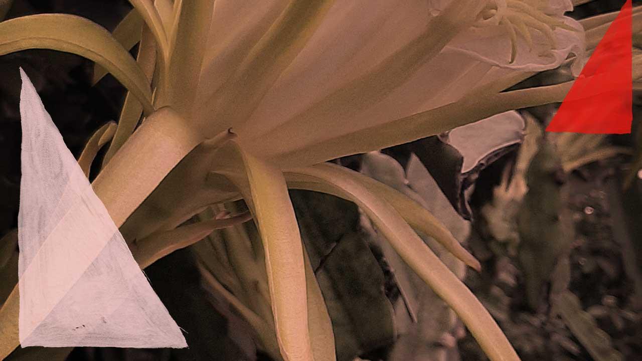 <b>Grazi Flores apresenta: Lacuna Tropical #81</b>